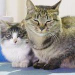 「猫だまり」なる魅惑のワードとネコチャン本