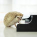 ピアノレパートリー作戦メモ。何をもってして「OK」とするのかの基準も考えてみた。